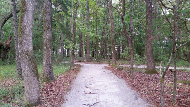 Road trip Estados Unidos: Caw Caw Interpretive Center – Ravenel/Carolina do Sul