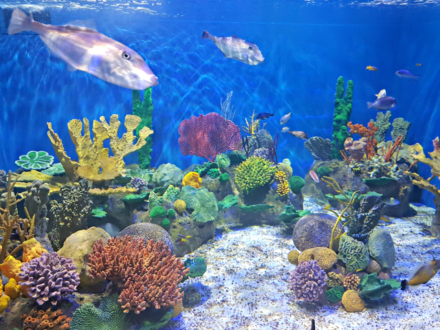 Conheça o AquaRio, o maior aquário da América do Sul