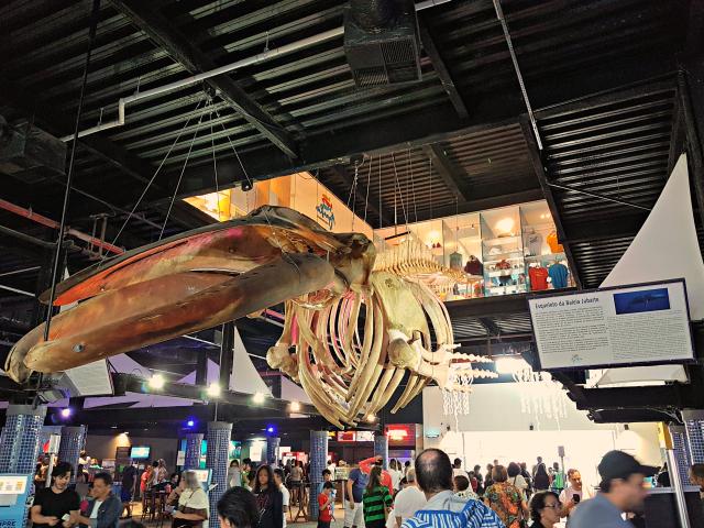 AquaRio-Esqueleto-baleia-jubarte