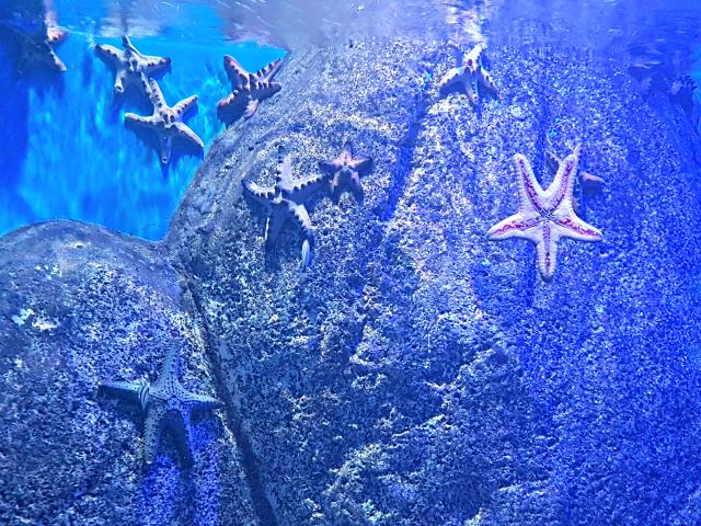 AquaRio-Estrela