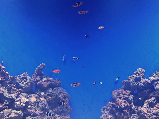 AquaRio-Peixe-Nemo