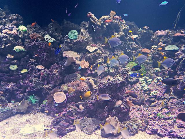 AquaRio-Peixes-Dory