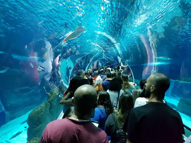AquaRio-Tunel-2