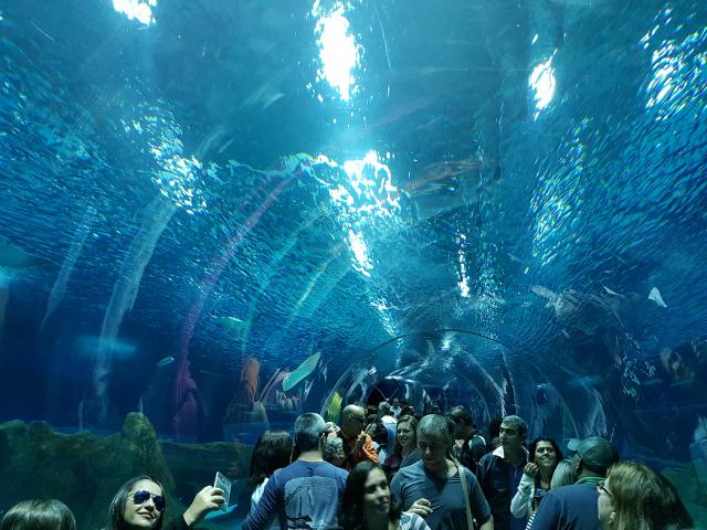 AquaRio-Tunel-3
