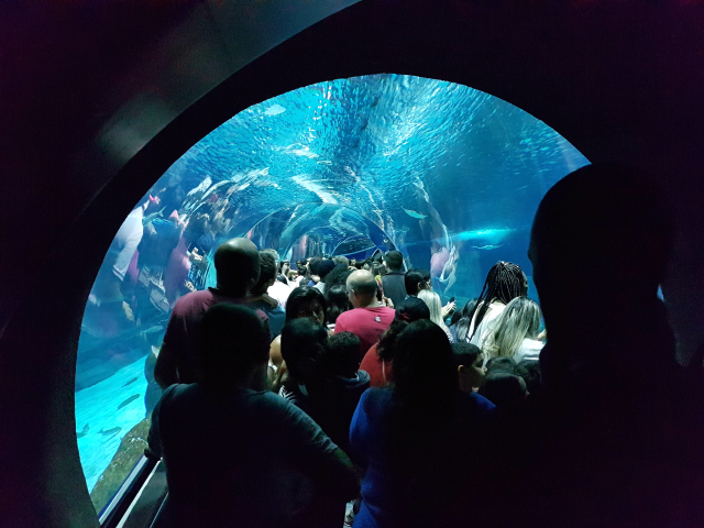 AquaRio-tunel