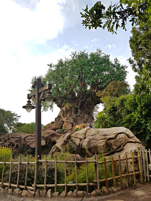 Disney Animal Kingdom - O que fazer em um dia na Disney?