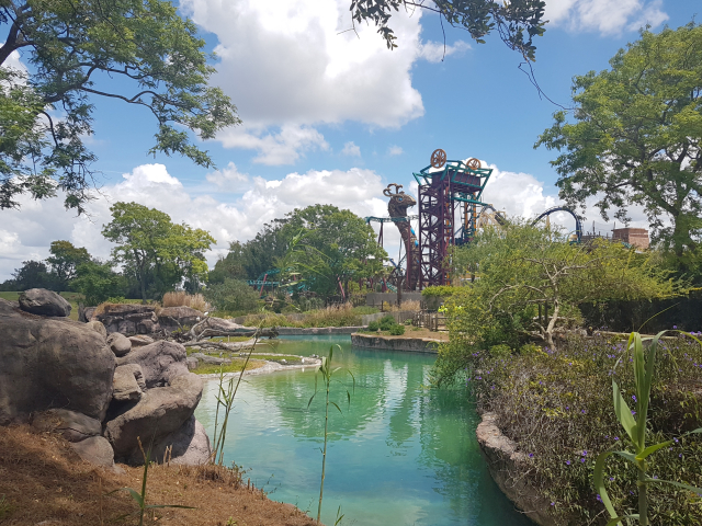 Busch Gardens Tampa Cobras Curse - O Parque mais Radical da Flórida: Busch Gardens