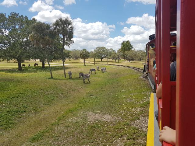 Busch Gardens Tampa Serengeti Area 1 - O Parque mais Radical da Flórida: Busch Gardens