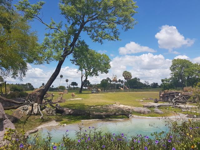 Busch Gardens Tampa Serengeti Train - O Parque mais Radical da Flórida: Busch Gardens